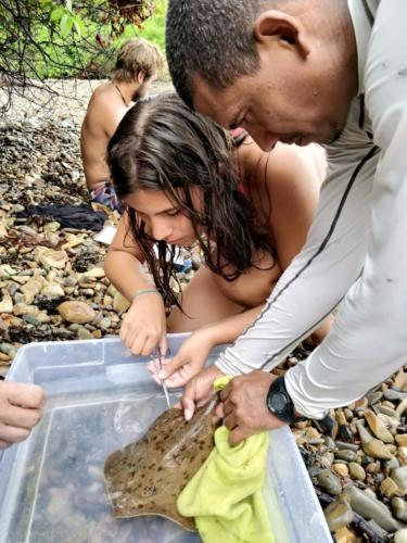 A volunteer and ETC member working together to sample a ray.